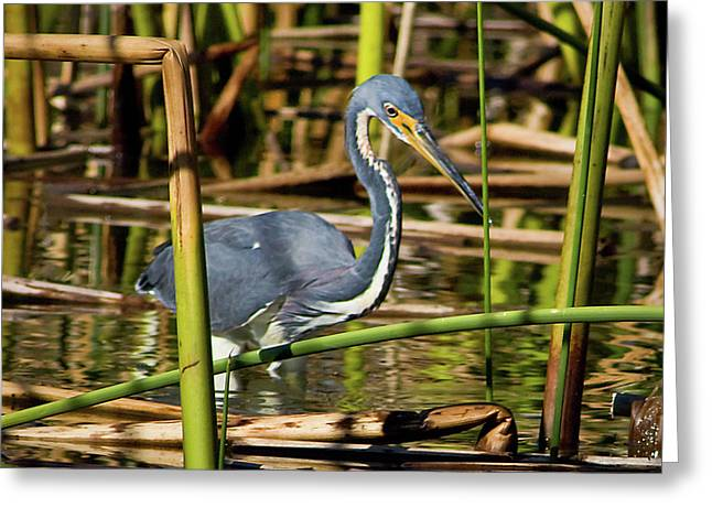 Wetlands Are My Home Greeting Card by Dawn Currie