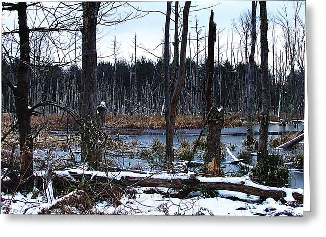 Wetlands In Winter Are Somber Yet Sublime Greeting Card by Terrance DePietro
