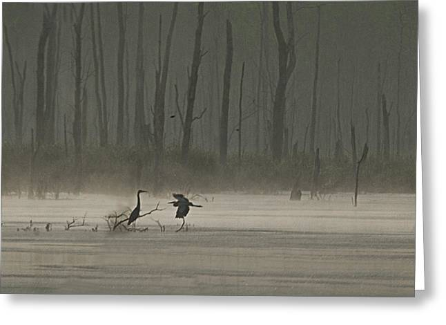 Wetlands Morning Greeting Card by Richard Engelbrecht
