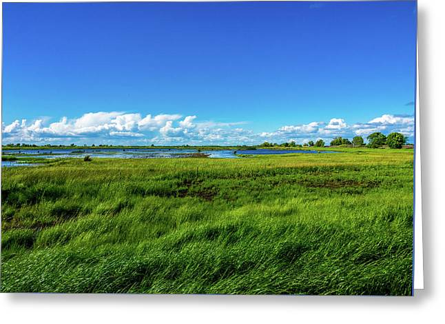 Wetlands On A Windy Spring Day Greeting Card