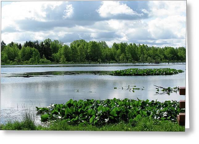 Wetlands Greeting Card by Trisha Dahm