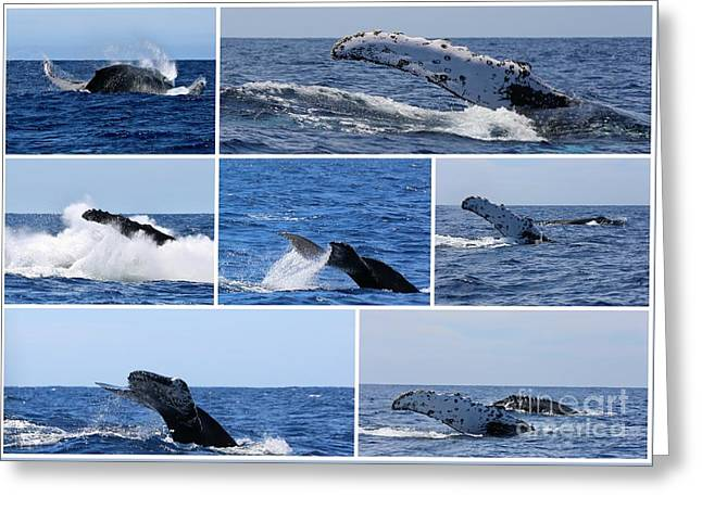 Whale Action Greeting Card