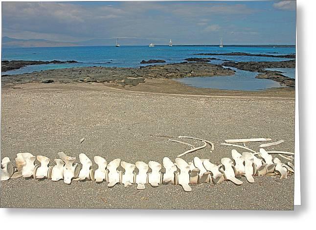 Whale Bones Greeting Card by Alan Lenk