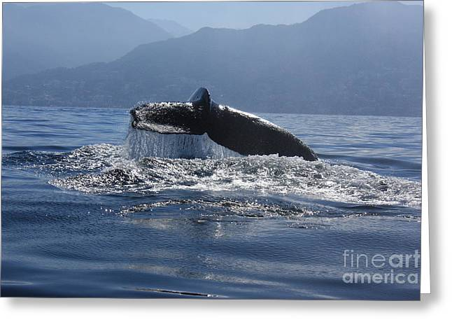 Whale Fluke Greeting Card