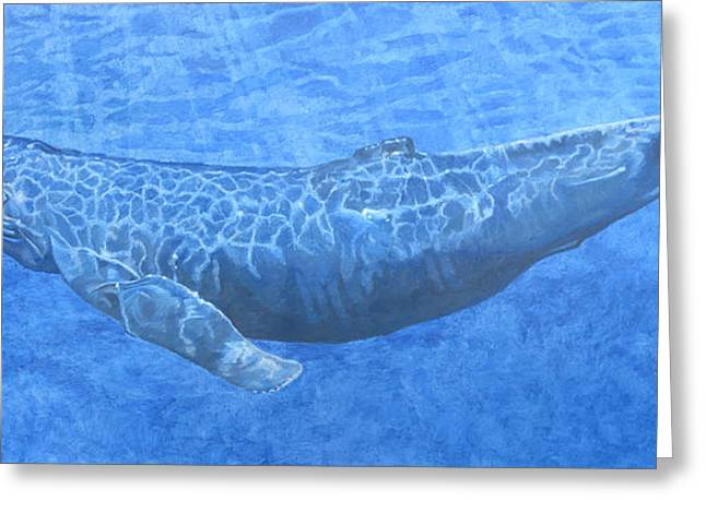 Whale In Surface Light Greeting Card