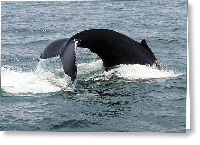 Whale Of A Tail Greeting Card