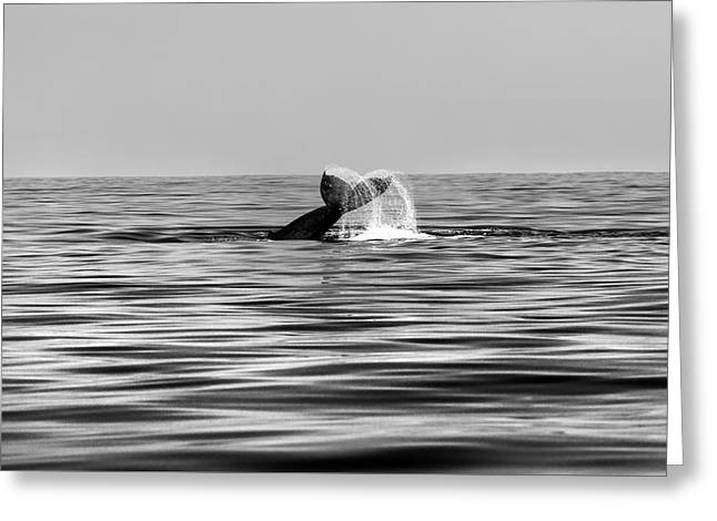 Whale Of A Tail Greeting Card by Sean Davey