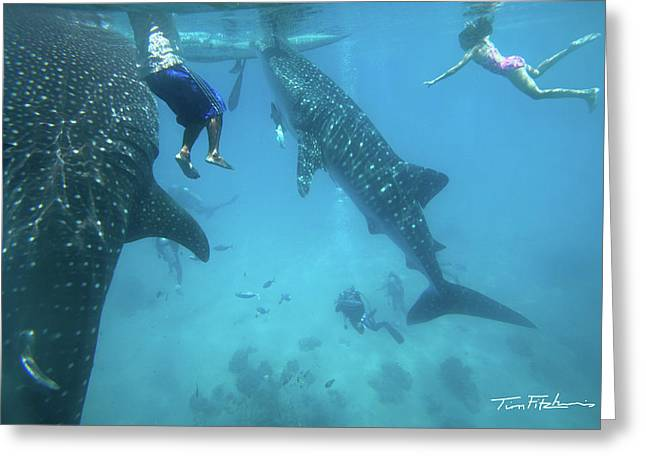 Whale Sharks Greeting Card by Tim Fitzharris