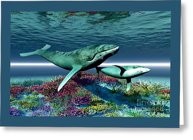 Whale Song Greeting Card by Corey Ford
