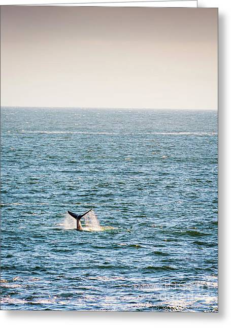 Whale Tail On Horizon Greeting Card by Tim Hester