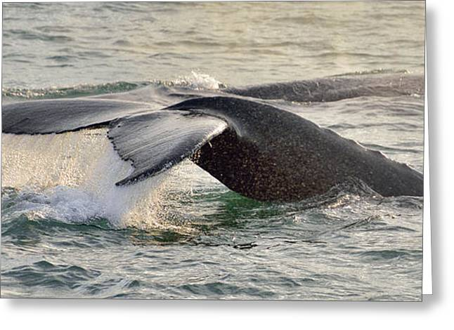 Whale Tail Waterfall Greeting Card by Jim Chamberlain