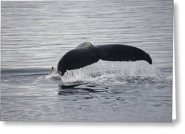 Whale Tail Waterfall Photo Greeting Card by Judy Mercer
