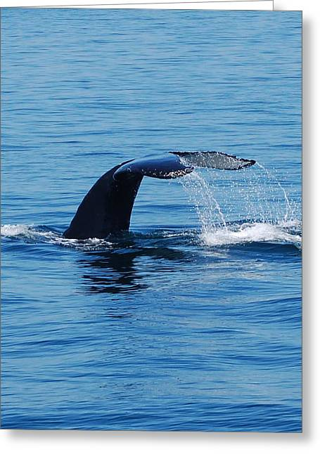 Whales Tale Greeting Card by Lisa Kane