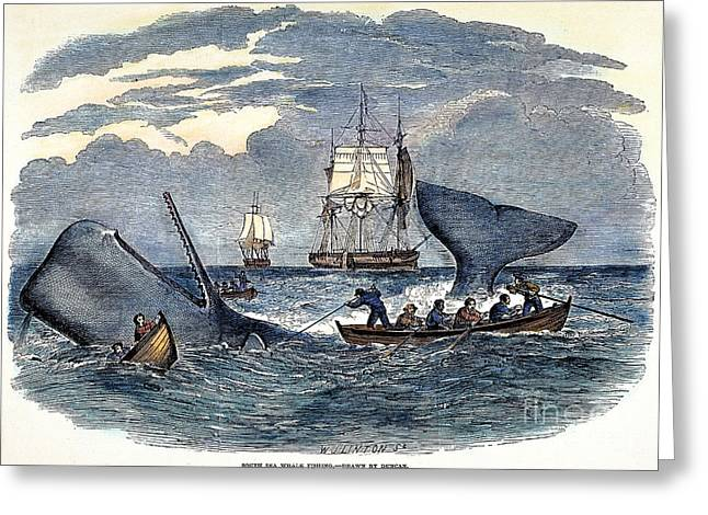 Whaling In South Pacific Greeting Card by Granger
