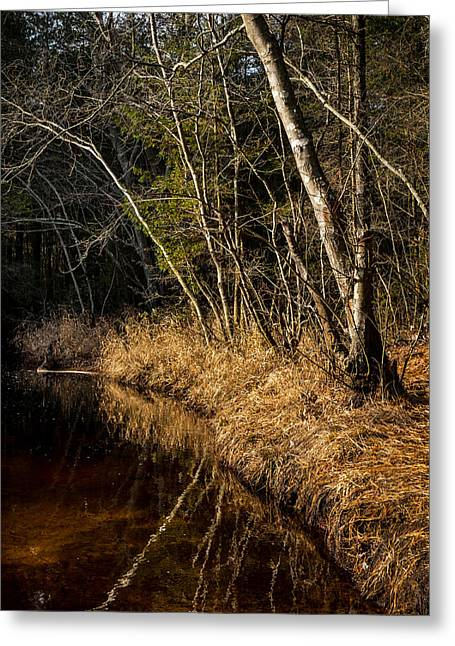 Wharton Forest Fall Greeting Card