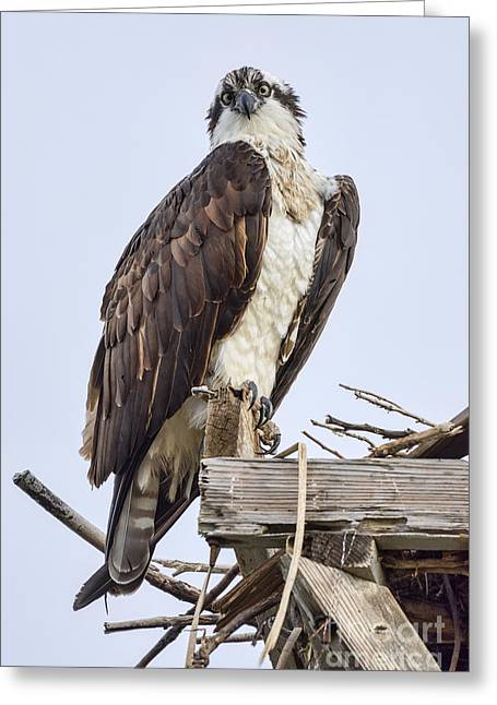 Greeting Card featuring the photograph What Are You Looking At by Eddie Yerkish