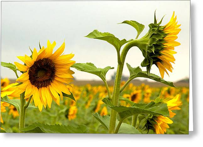 What Did I Say Greeting Card by Robert  McCord