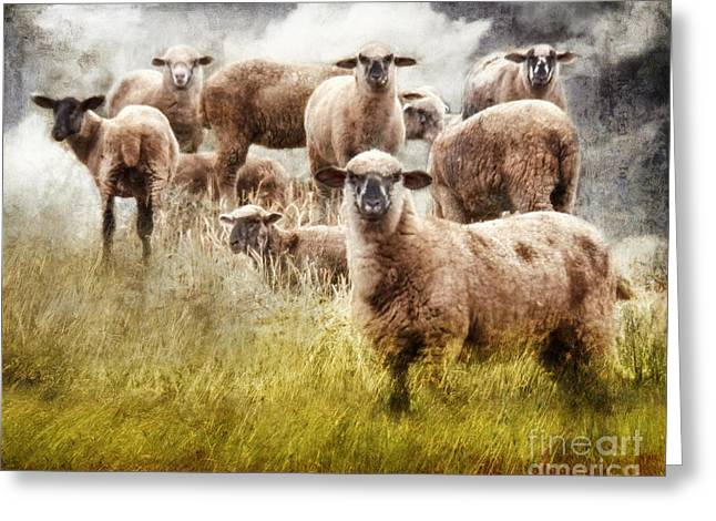 Greeting Card featuring the photograph What You Lookin' At? by Rhonda Strickland