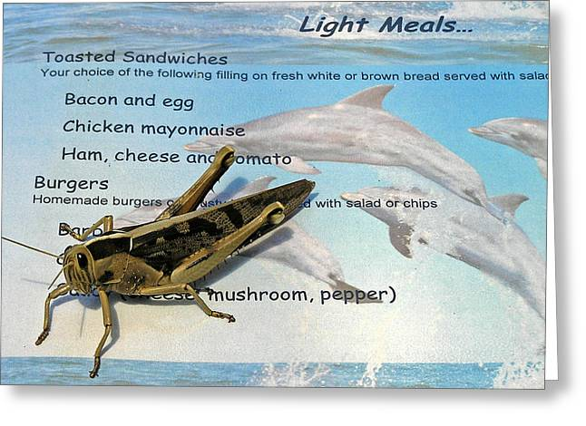 Greeting Card featuring the photograph Whats On The Menu Today by Phil Stone