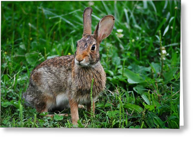 Jack Rabbit Greeting Cards - Whats Up Doc Greeting Card by Bill Cannon