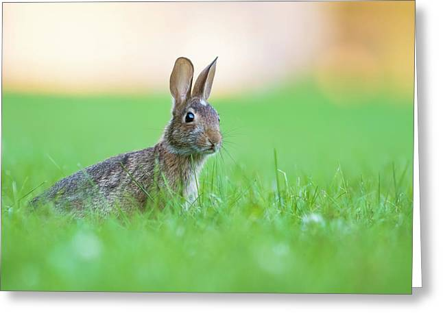 What's Up Doc? Greeting Card