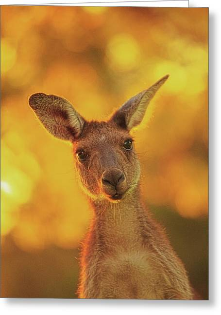 What's Up, Yanchep National Park Greeting Card