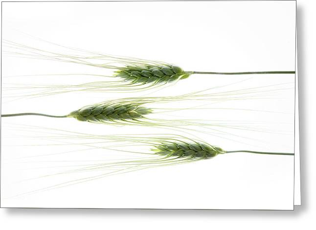 Greeting Card featuring the photograph Wheat 3 by Rebecca Cozart