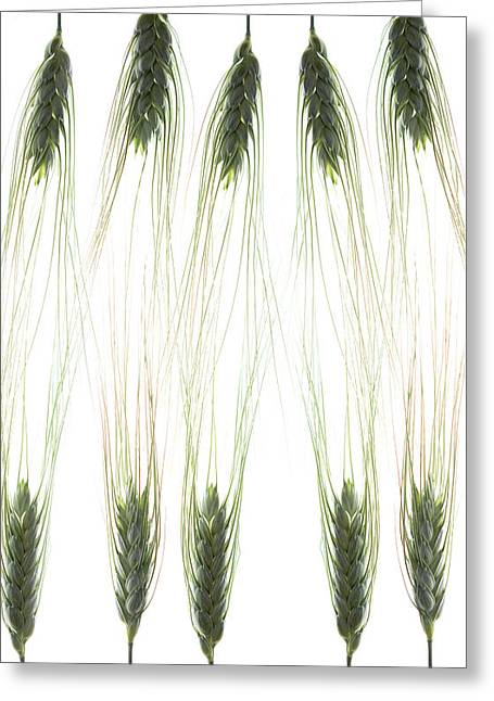 Greeting Card featuring the photograph Wheat 4 by Rebecca Cozart