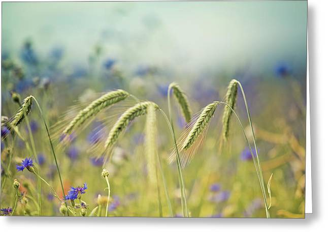 Wheat And Corn Flowers Greeting Card