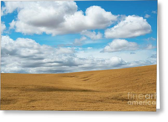Wheat And Fleece Greeting Card by Mike Dawson