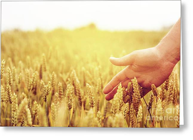 Wheat Ears Field Greeting Card