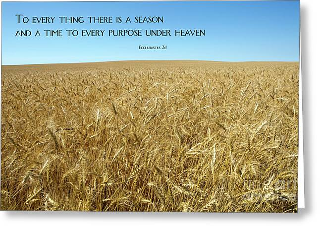 Wheat Field Harvest Season Greeting Card