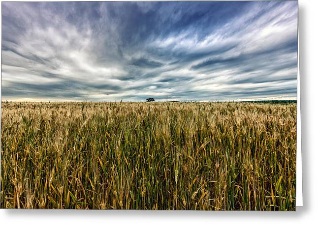 Wheat Field Greeting Card by Stelios Kleanthous