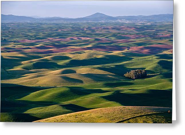 Wheat Fields Of Palouse Greeting Card by Lee Chon