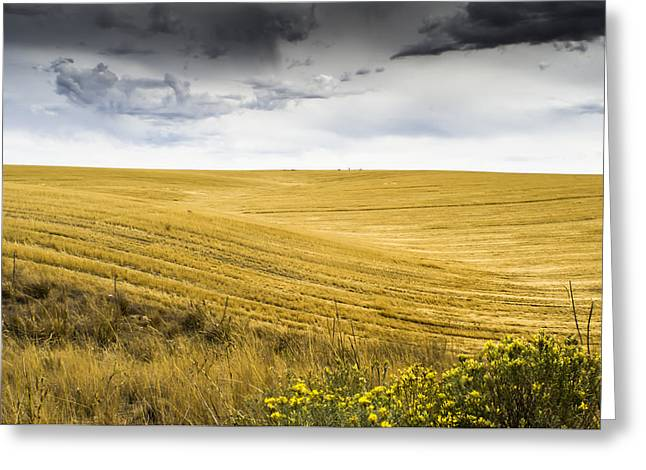 Wheat Fields With Storm Greeting Card by John Trax