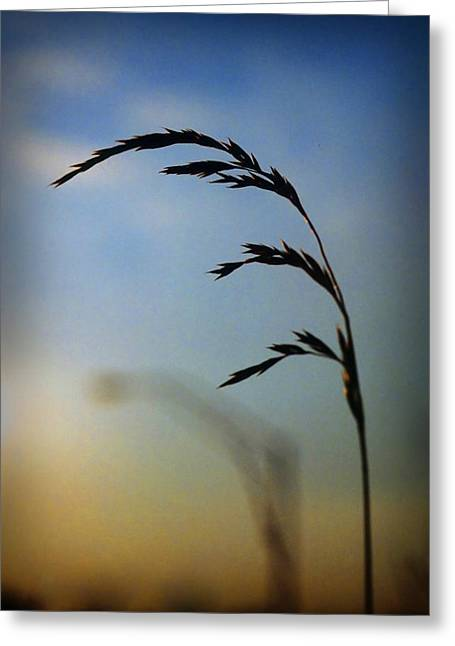 Wheat In Silhouette Greeting Card by Dave Chafin