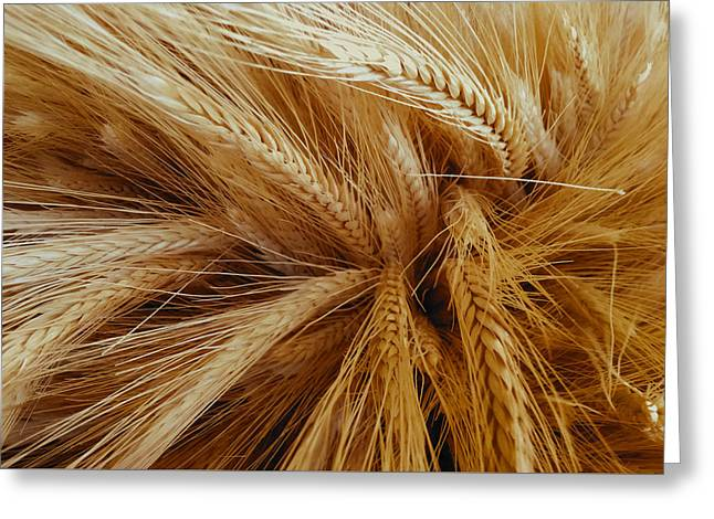 Wheat In The Sunset Greeting Card