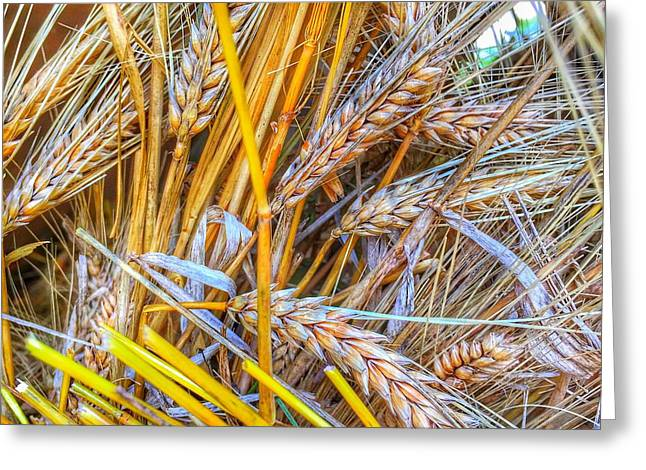 Greeting Card featuring the photograph Wheat by Jame Hayes