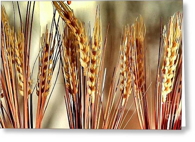 Wheat Stalks  Greeting Card by Scott D Van Osdol