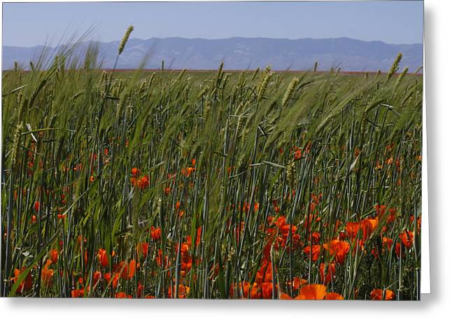 Greeting Card featuring the photograph Wheat With Poppy  by Ivete Basso Photography
