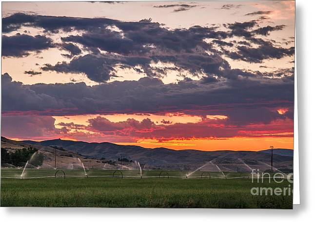 Wheel Line Sunrise Greeting Card by Robert Bales