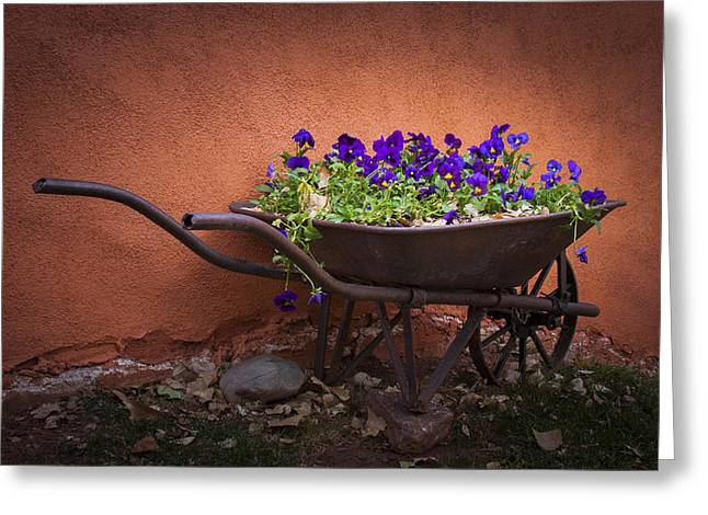 Wheelbarrow Full Of Pansies Greeting Card