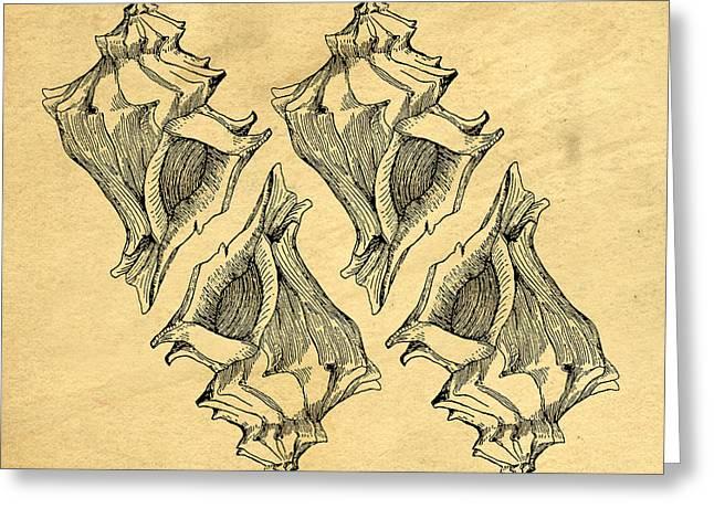 Whelk Seashells Vintage Greeting Card by Edward Fielding