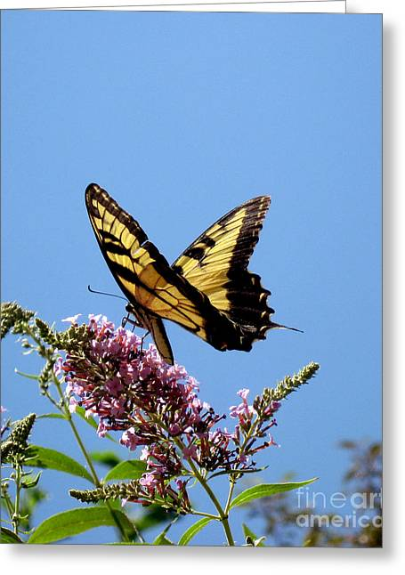 When Butter Flies Greeting Card by Terri Creasy