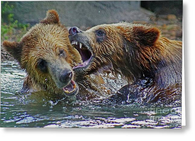 When Grizzlies Play Greeting Card