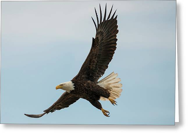 When The Eagle Flies Greeting Card