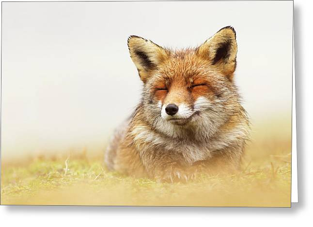 When The Lady Smiles - Red Fox Greeting Card