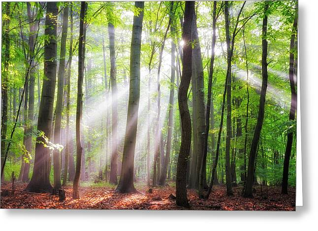 When The Sun Shine On Your Way Greeting Card by Janek Sedlar