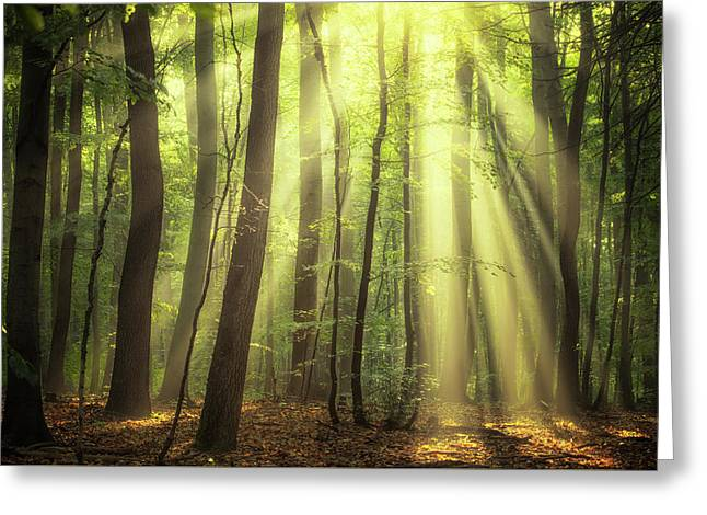 When The Sun Touch Your Heart Greeting Card by Janek Sedlar