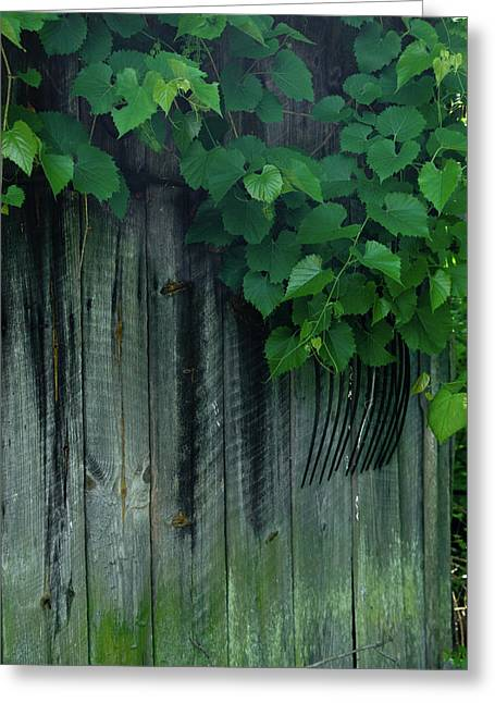 Revelry Greeting Cards - Wher rhe Grape Vines Twine Greeting Card by Douglas Barnett